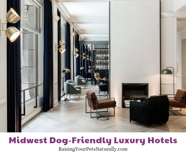 5 star dog friendly hotels in Illinois