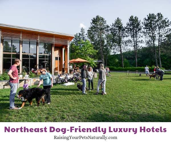 Five star new england dog friendly resorts