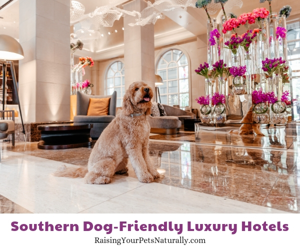 The best southern pet friendly hotels