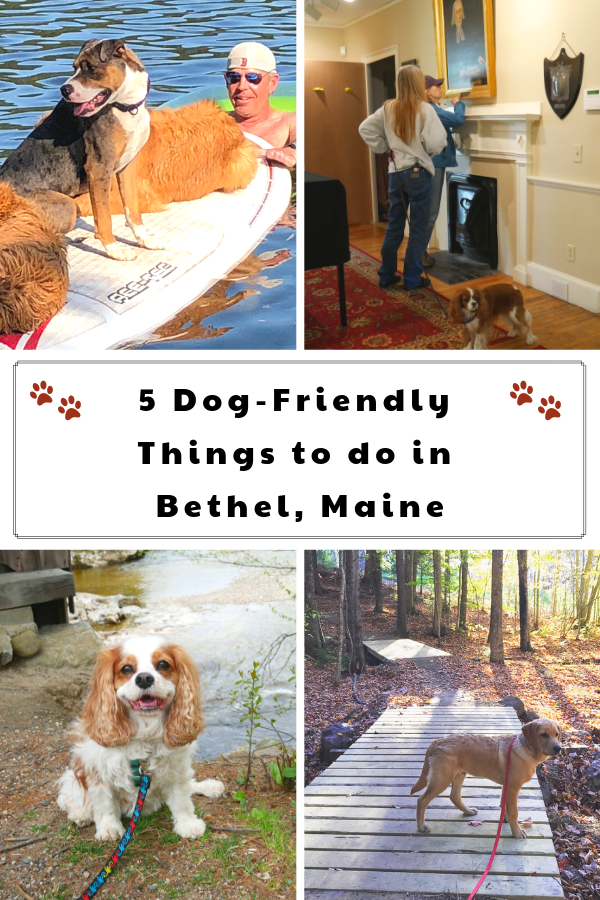 5 Dog-Friendly Things to do in Bethel, Maine