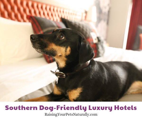 Tennessee luxury pet friendly hotels