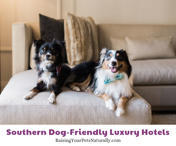 Luxury pet friendly hotels Austin Texas