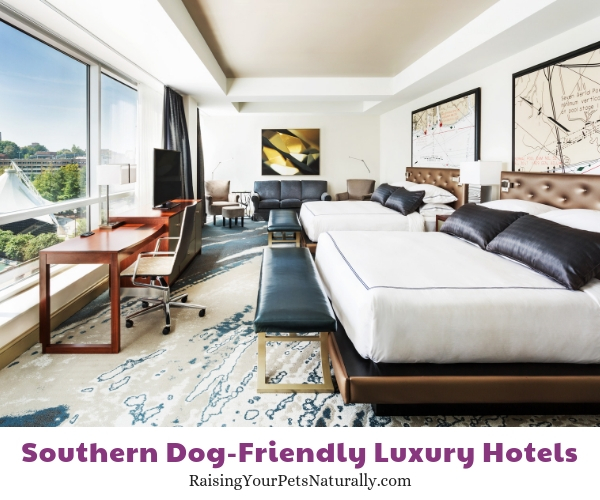 Best dog-friendly hotels in Tennessee