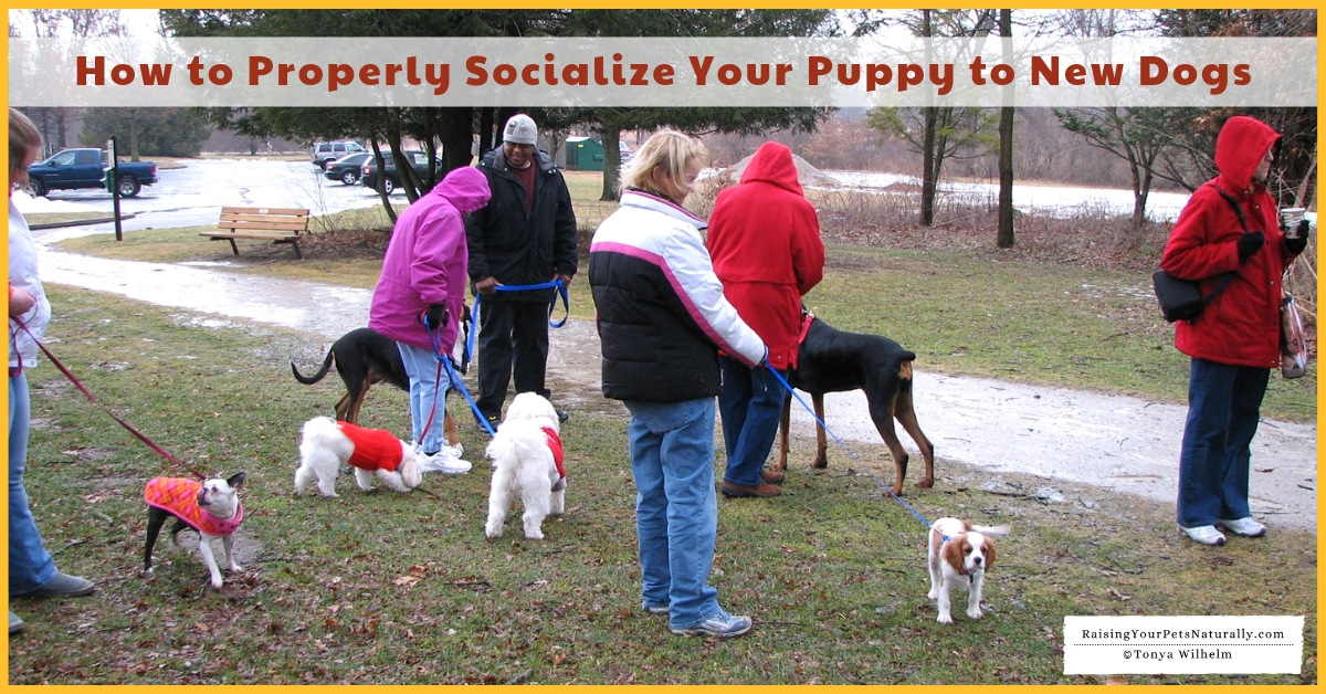 Best Way to Socialize a Puppy to Unfamiliar Dogs