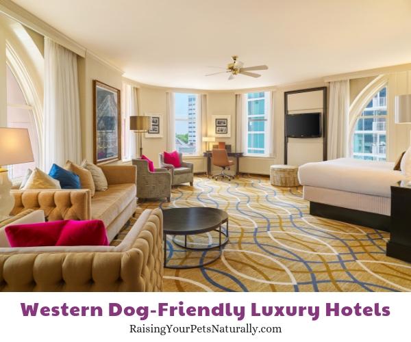 Denver CO luxury pet friendly hotels