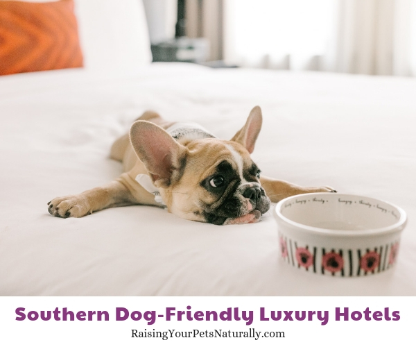 Dallas TX pet friendly hotels