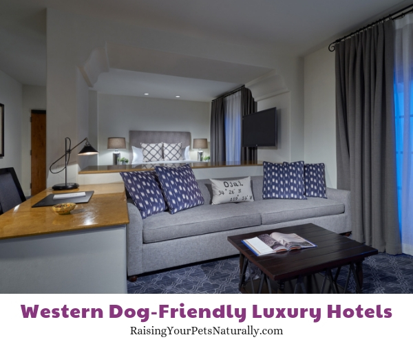 5 star dog friendly resorts in CA