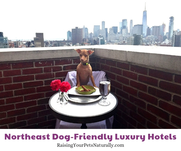 NY five star dog friendly hotel
