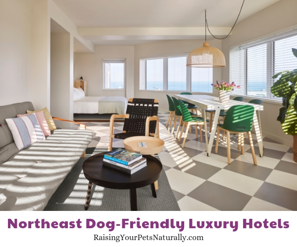 New Jersey dog friendly luxury resorts