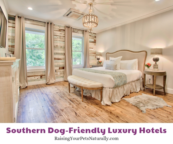 five star dog-friendly southern hotels