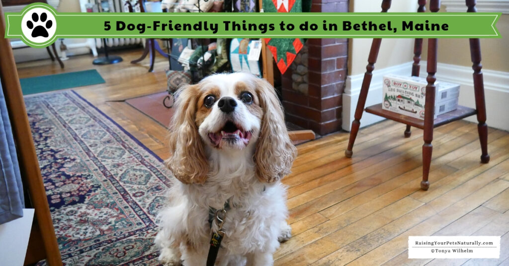 What to do in Bethel, Maine with a pet