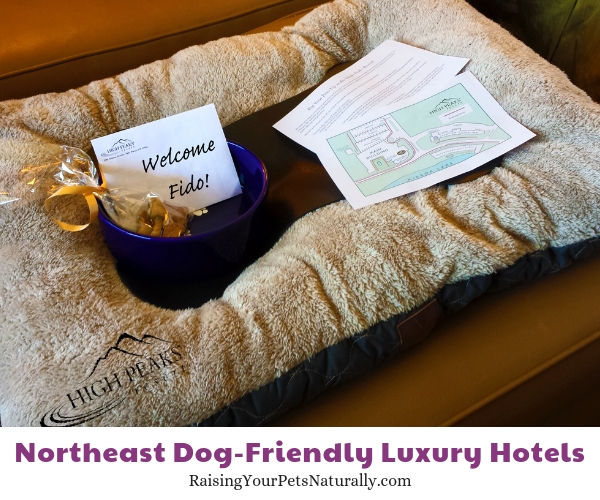 Pet friendly Lake Placid five star resorts