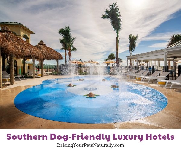 Luxury Florida resorts that allow pets