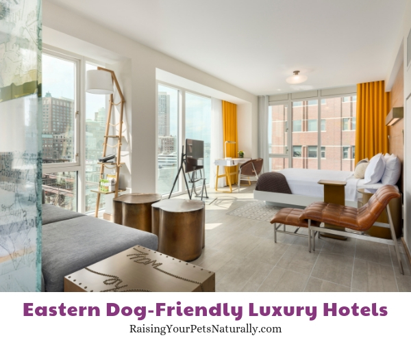 Boston five star pet friendly hotels