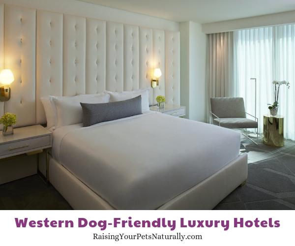 Five star Nevada pet friendly hotels