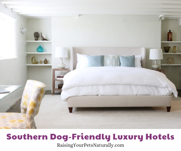 5 star pet friendly hotels
