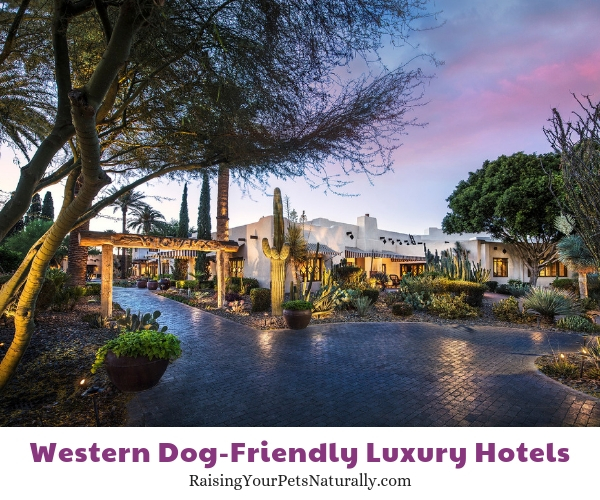 Arizona dog friendly resorts