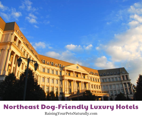 Best dog friendly hotels in Pennsylvania