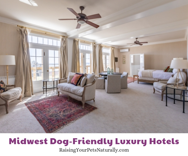 Best luxury hotels in Michigan that are dog-friendly