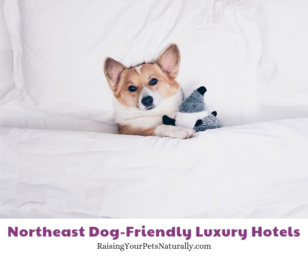 New York City top dog friendly hotels