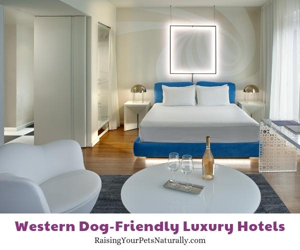 Best LA pet friendly hotels