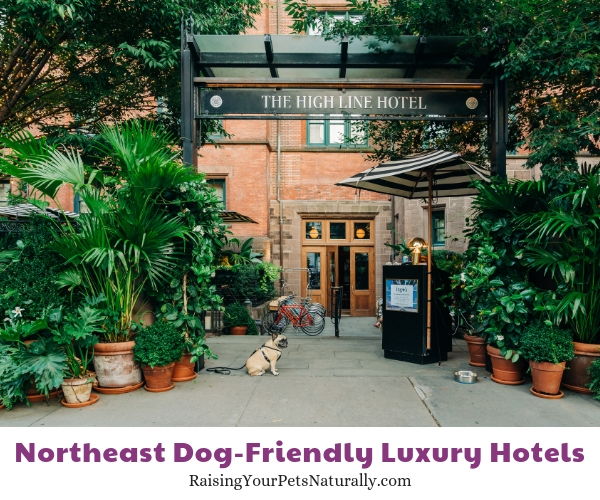 Top NY NY dog friendly hotels