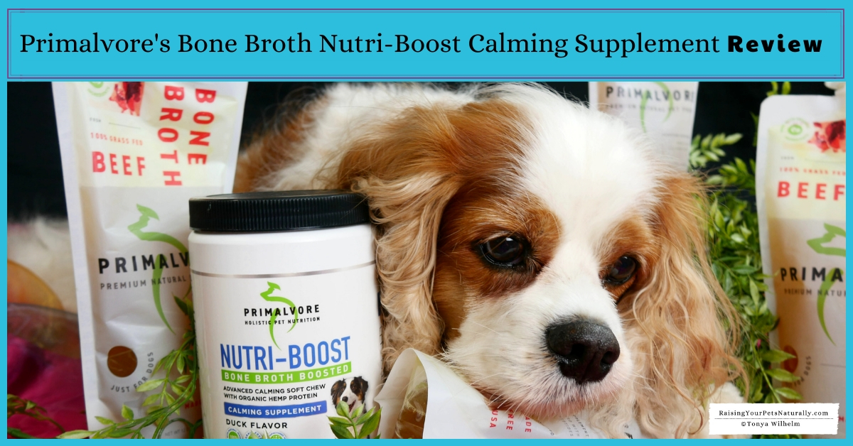 Help for a dog with stress and anxiety