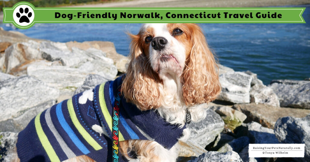 Pet-friendly Norwalk, CT Travel Guide