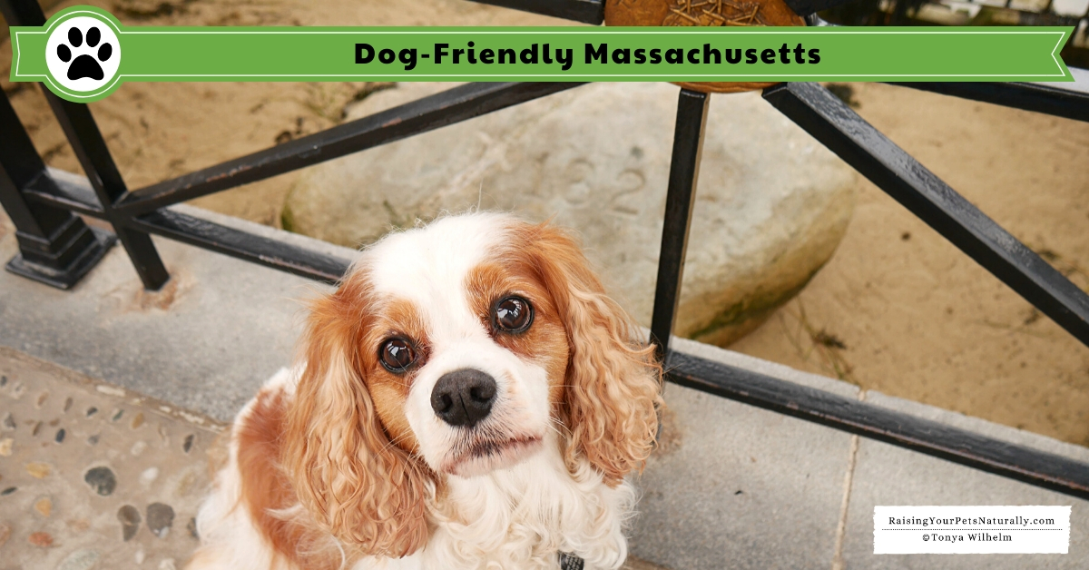 Dog-friendly MA things to do