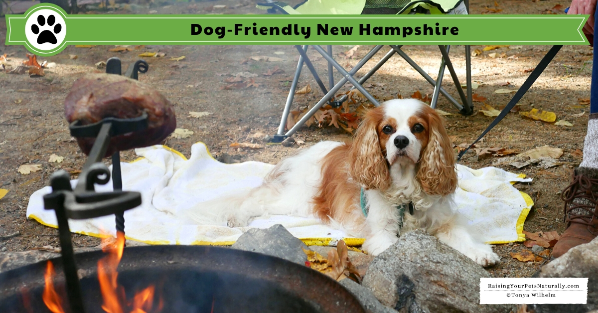 Pet-friendly NH