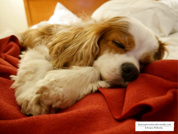 Best pet friendly New England hotels