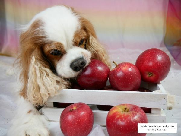 Can a dog eat an apple