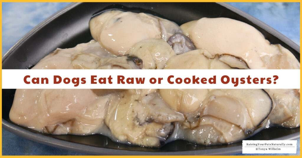 Are oysters safe for dogs