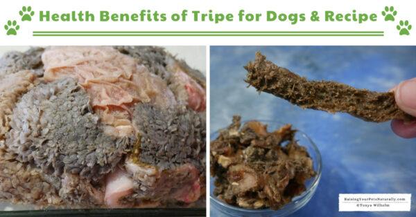 Green tripe dog food