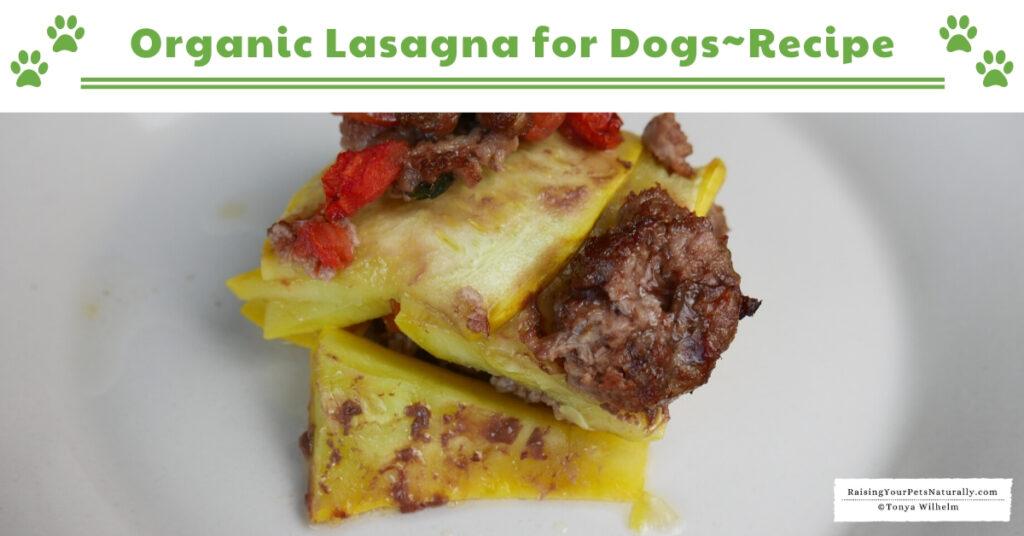 Best dog treat recipes
