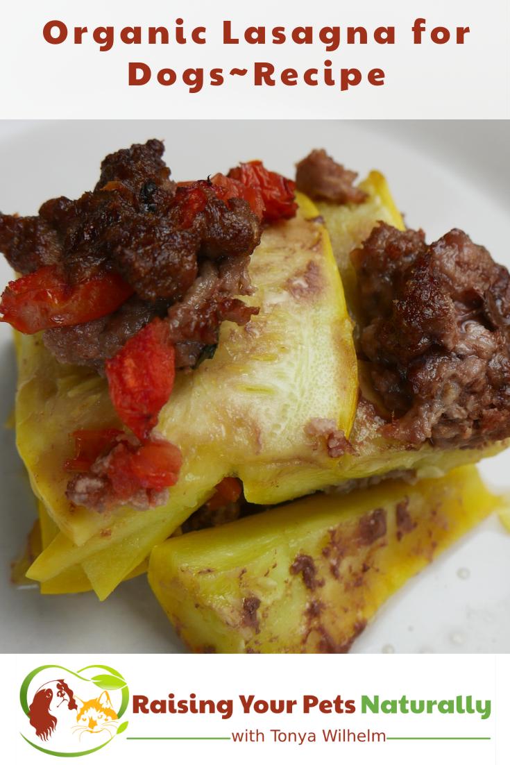 Healthy Homemade Dog Treat Recipe | Organic Lasagna for Dogs
