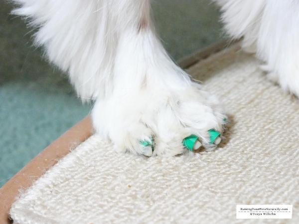 Natural senior dog care