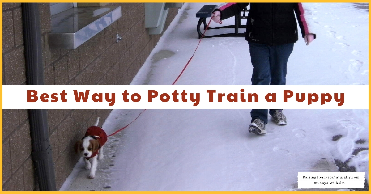 How to potty training a dog