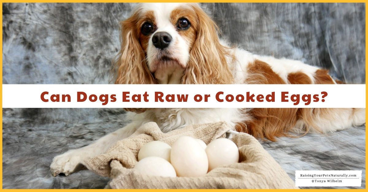 Is raw egg good for dogs