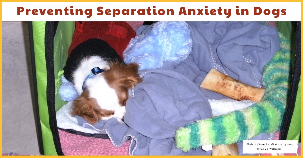 Stop puppy anxiety