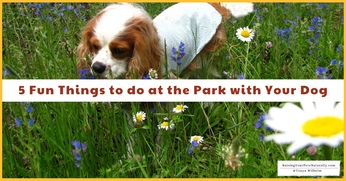Puppy Park Ideas