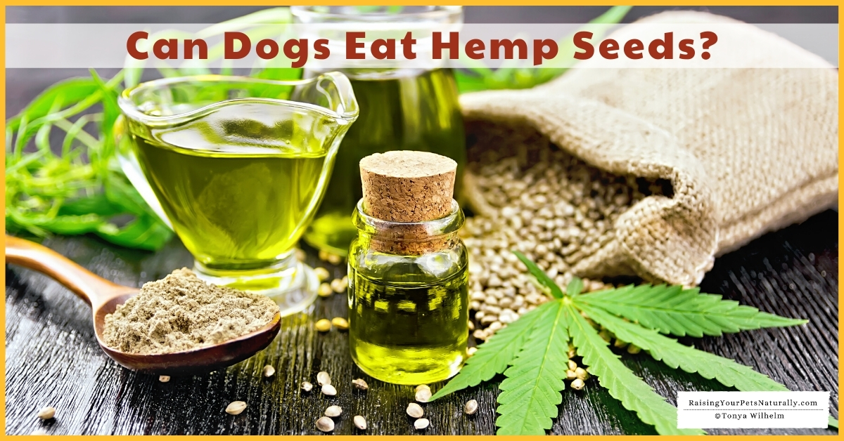 Can dogs have hemp seeds?