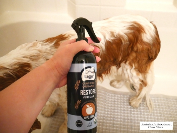 At home allergy treatment for dogs