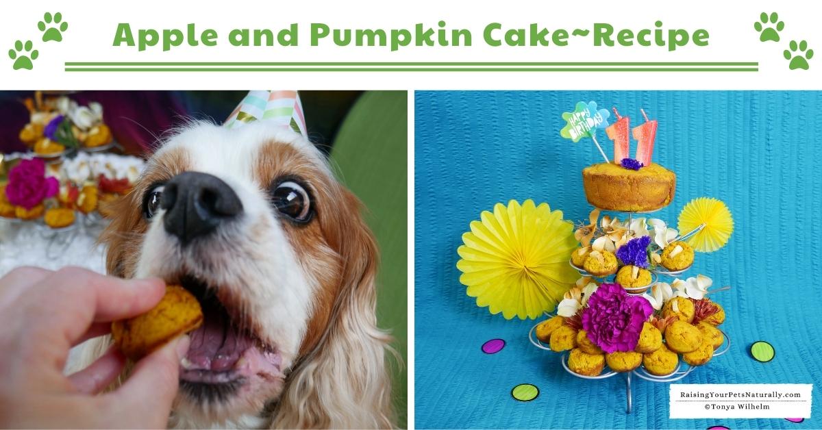 Healthy puppy cake recipes