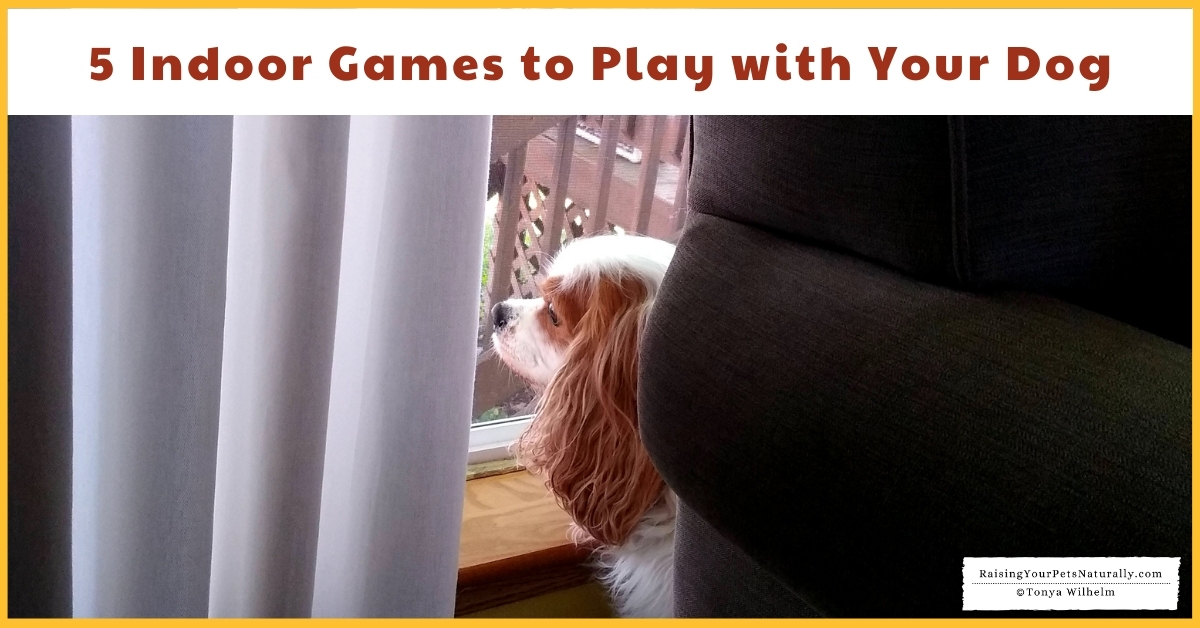 Games to play with a dog inside