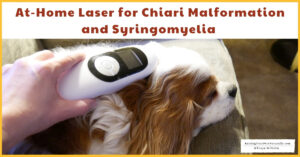 At-Home Cold Laser Therapy for Dogs with Chiari Malformation (CM) and Syringomyelia (SM) (Early access for our Patreon community)