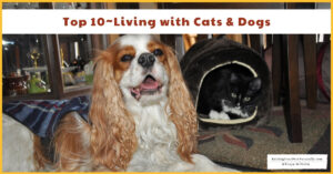 Top 10 Tips for Raising Dogs and Cats Together | Dogs and Cats Living Together in Harmony (Early access for our Patreon community)