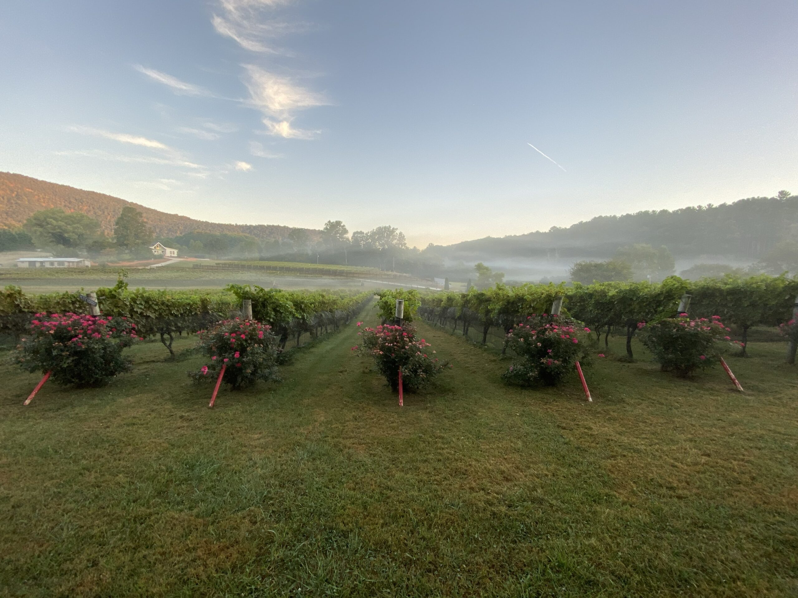 north georgia winery, stonewall creek vineyards