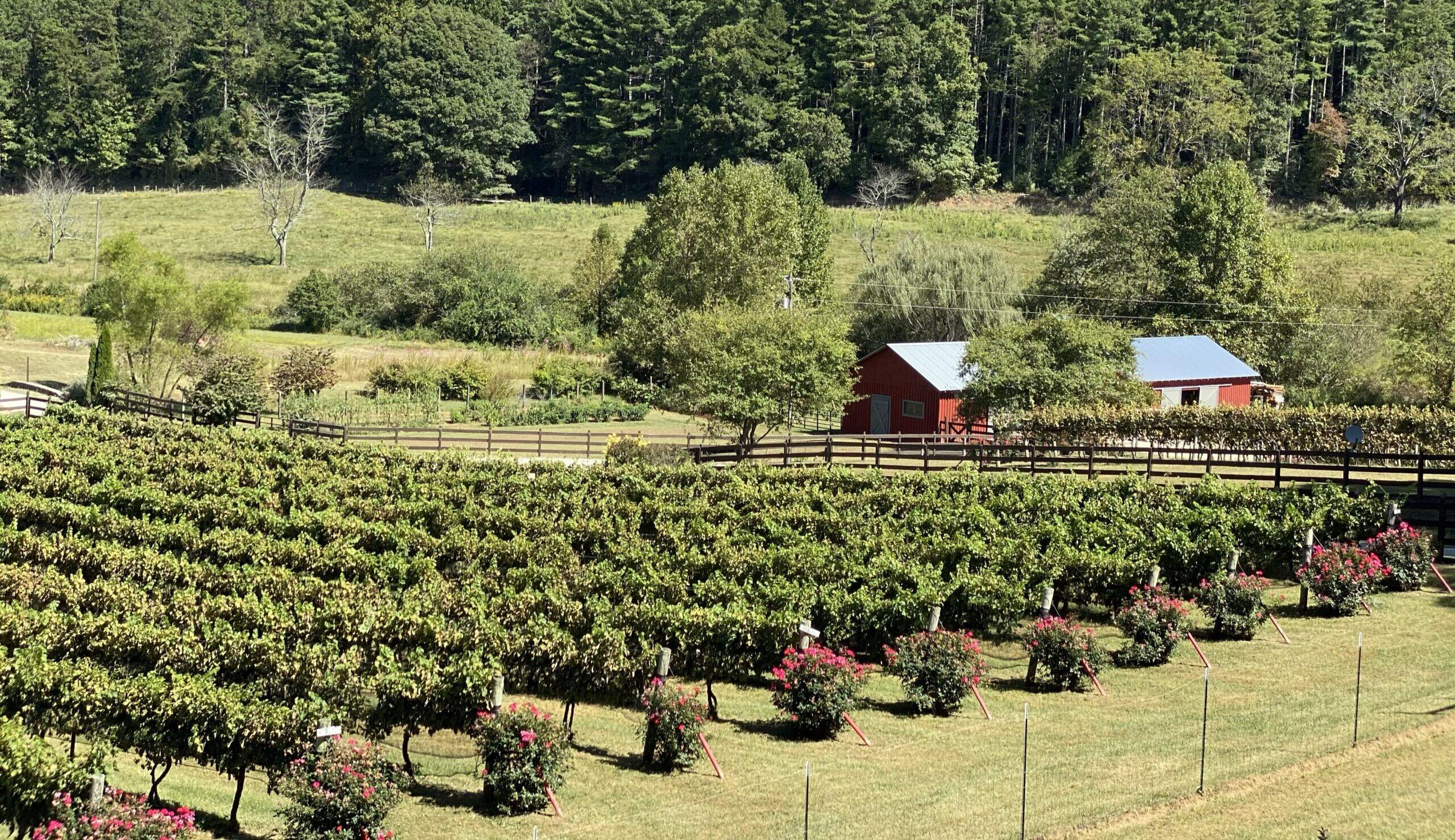 stonewall creek vineyards, north georgia winery