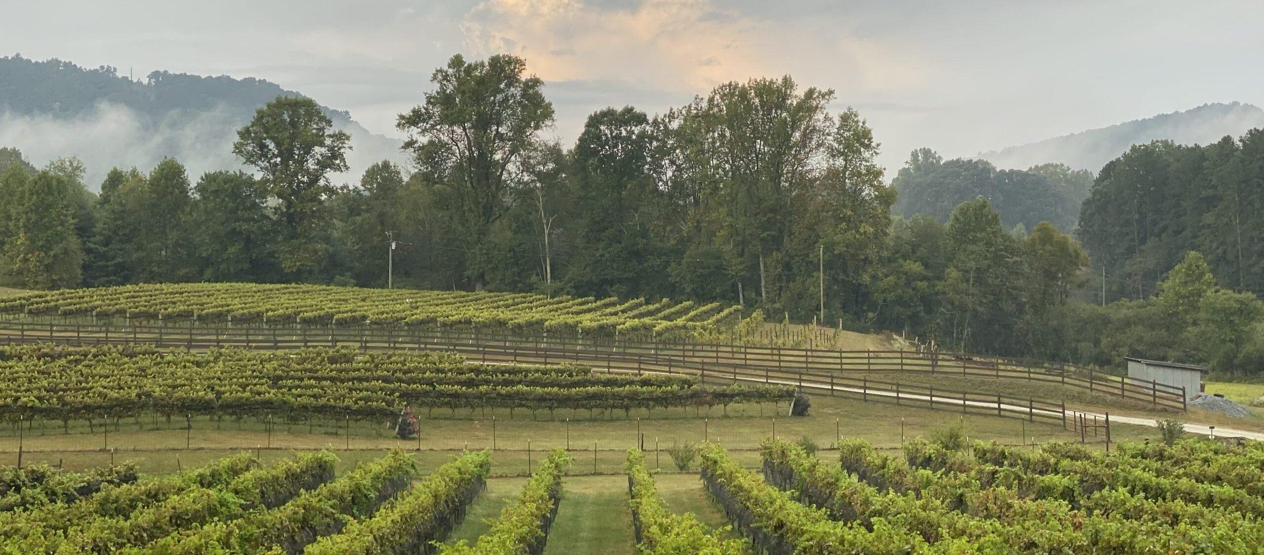 stonewall creek vineyard